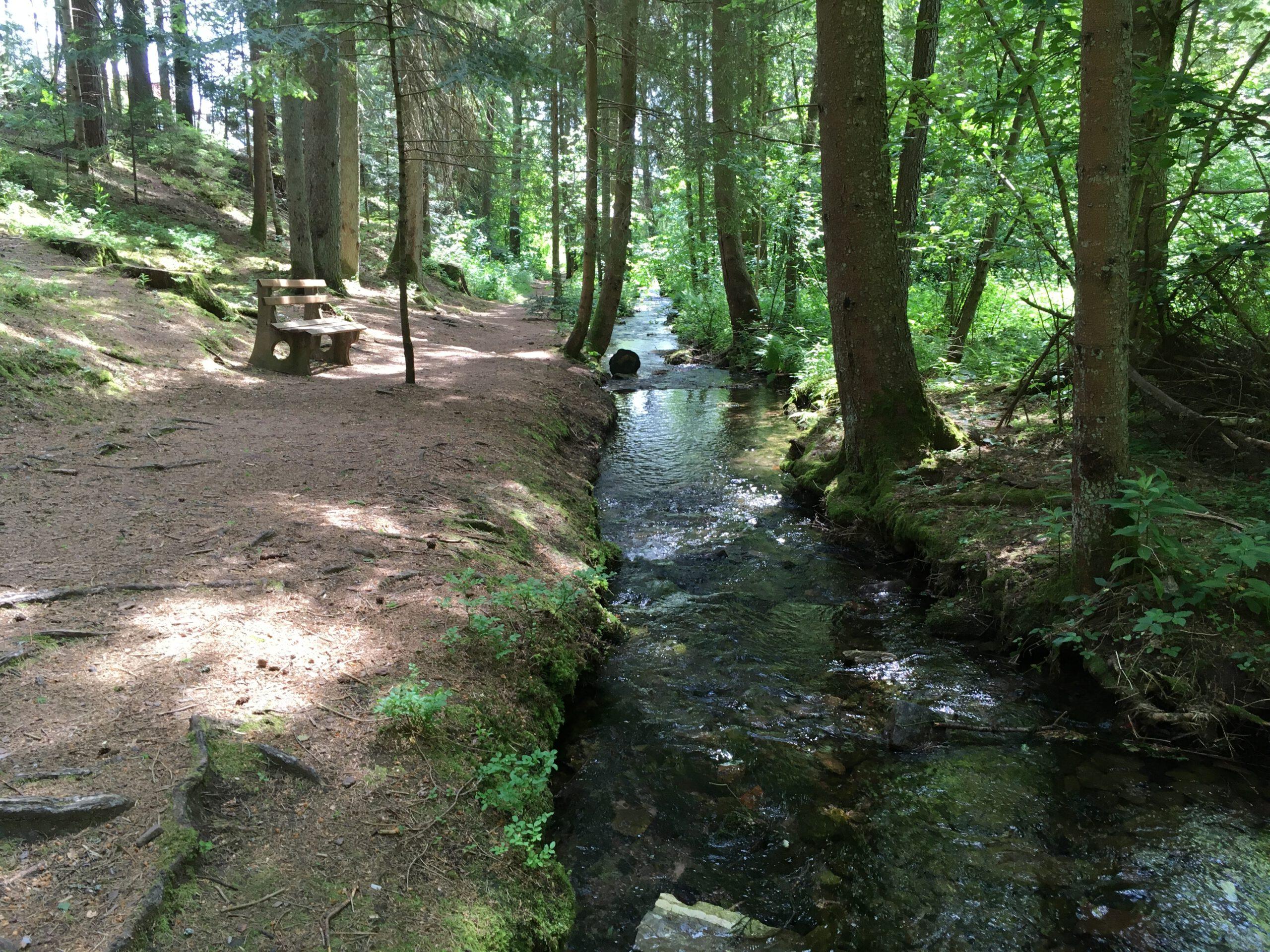 WEDEWER Wald-Gesundheitstraining